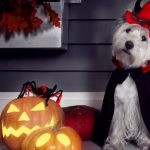 5 risks for pets at Halloween
