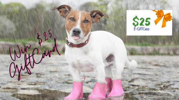 Win a $25 Giftcard April Showers