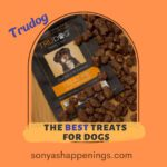 best treats for dogs